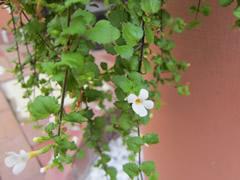 autumnflowerberry5.jpg
