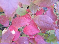 autumnflowerberry7.jpg