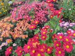 autumnflowerberry9.jpg