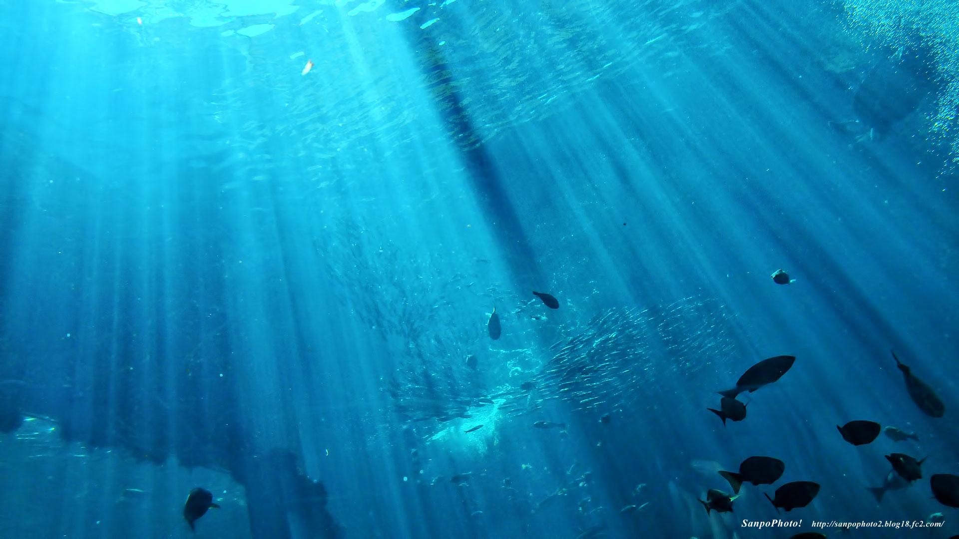 さんぽふぉと Sanpophoto 無料壁紙 美しい下田海中水族館の