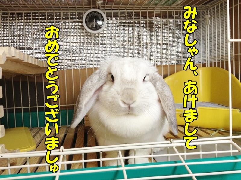 201301011847374da.jpg