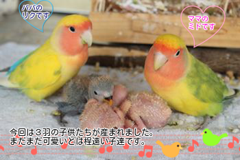 201303062058014c0.png