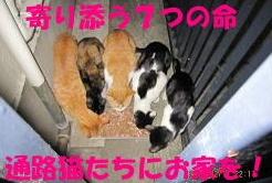 寄り添う7つの命 通路猫たちにお家を!