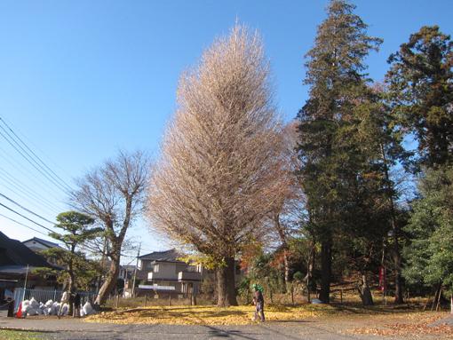 12-12-11-03.jpg