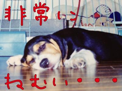 fc2blog_201210180108166eb.jpg