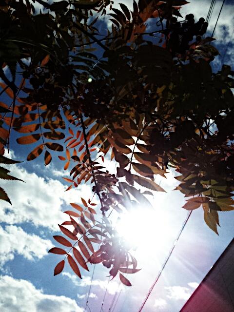 PicsArt_1350652995809.jpg