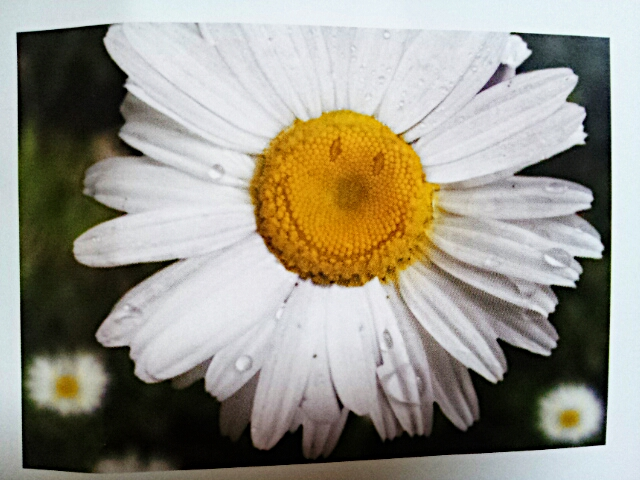 PicsArt_1352938713234.jpg