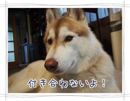 20121129132154264.jpg